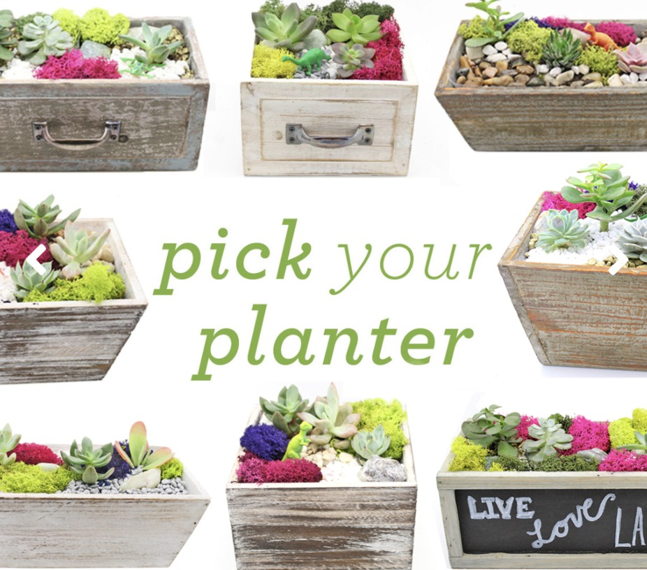 Plant Nite: Pick Your Planter! event photo