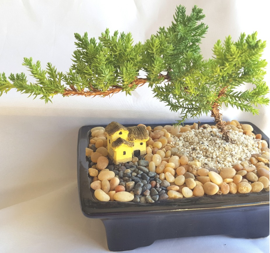 Plant Nite: Juniper Bonsai Trees for Beginners event photo