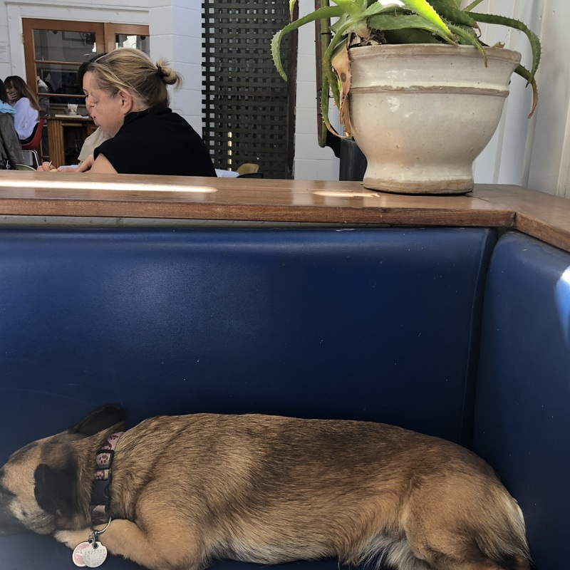 a dog sleeping on a booth