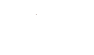 Mesquite Creek Outfitters