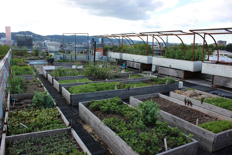 image of rooftop garden