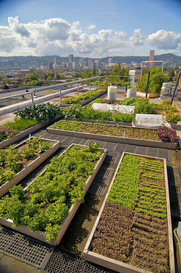image of rooftop garden