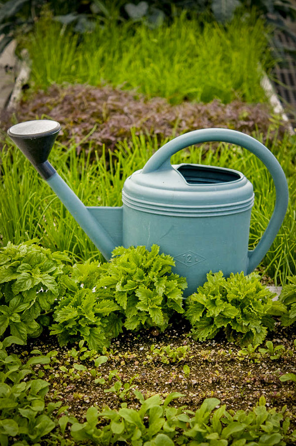 image of water bucket in the garden