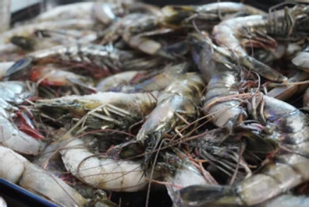 black shrimps