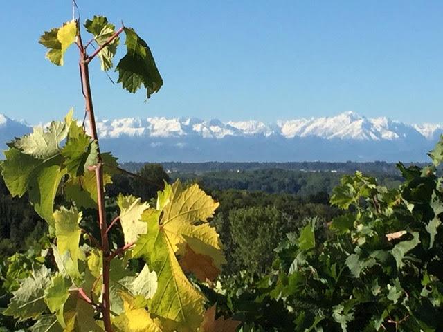 mountine vines